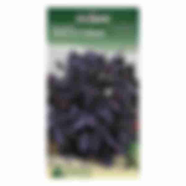 Семена Базилик Фиолетовый 0,5г